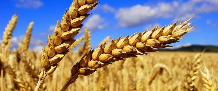 Certification in animal feed industry